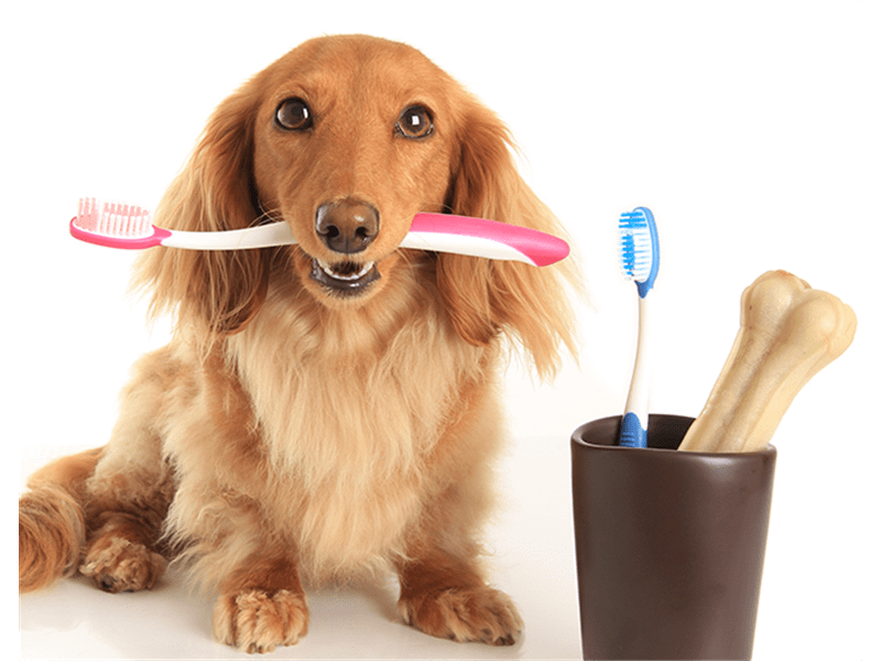 Vet examines dogs teeth - Pet dentistry in Signal Hill, CA